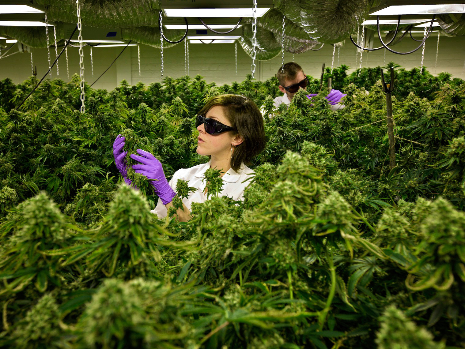 Indoor Marijuana Farm, California