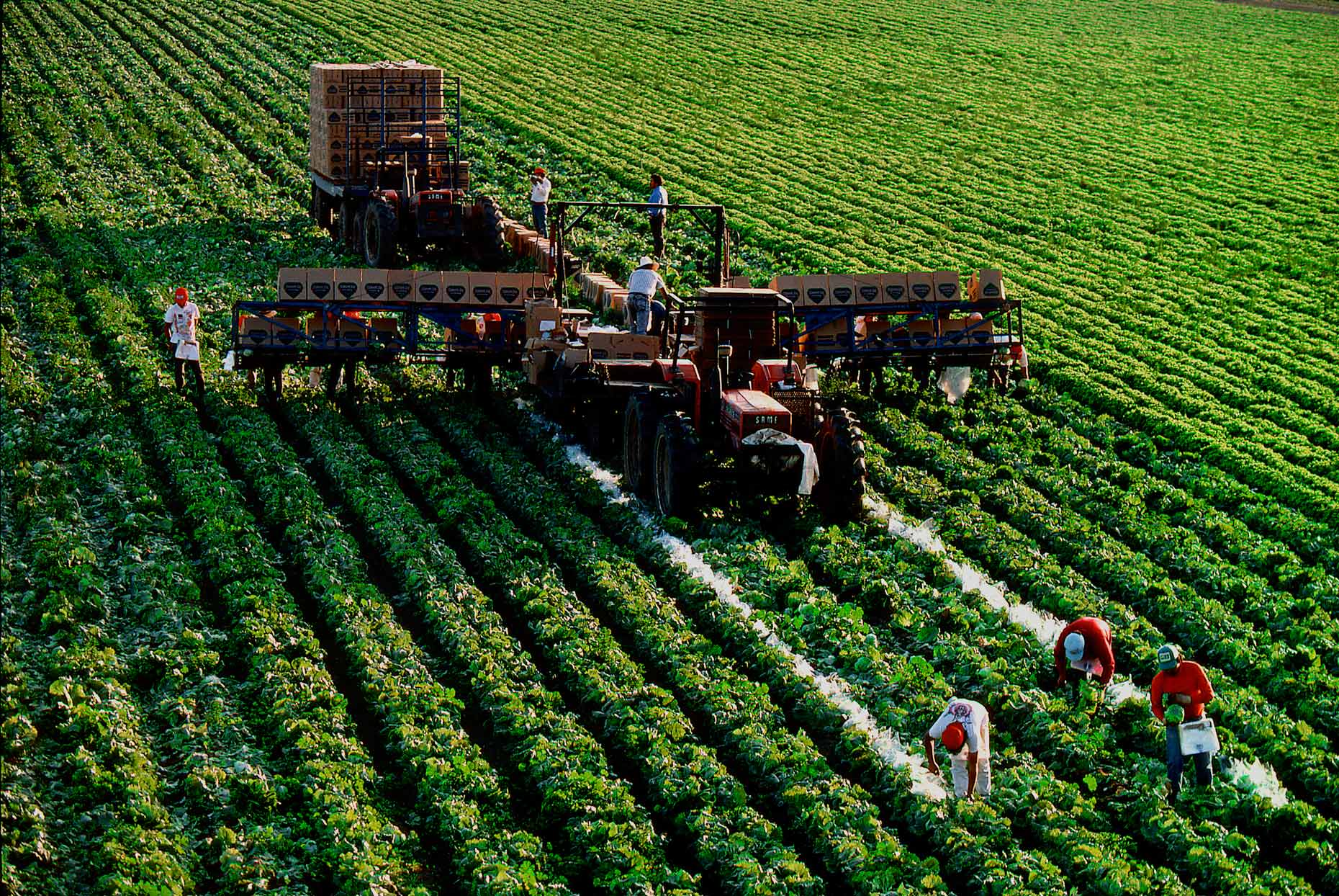 Lettuce Harvest, Salinas, CA, for International Paper