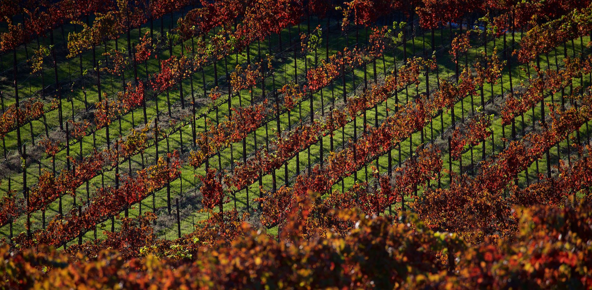Sbragia Family Vineyards, Dry Creek Valley, California