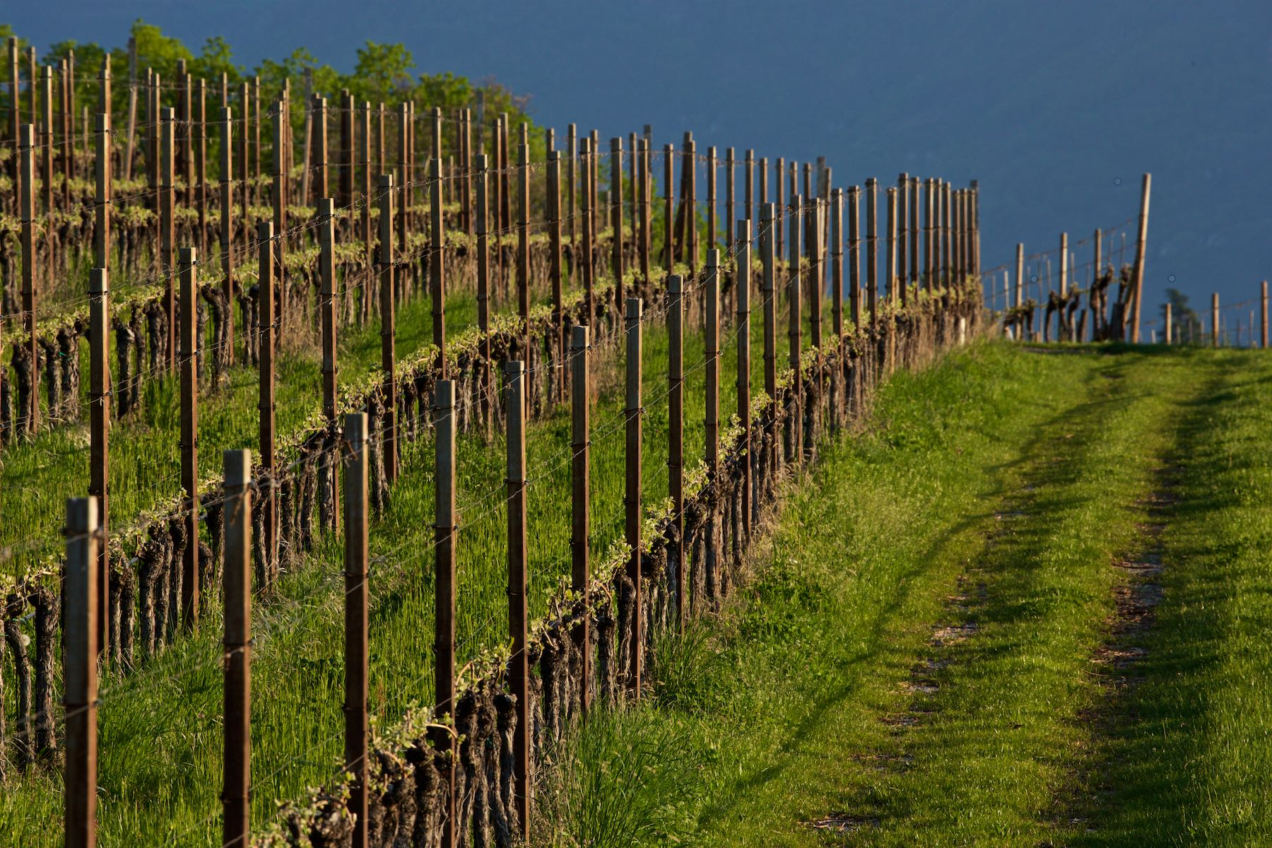 Muri-Gries Vineyard, Appiano