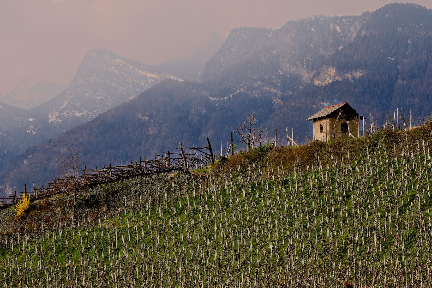 Mountains and Vineyard, Eppan